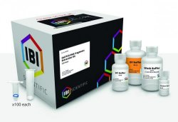 DNA Fragment Extraction Kit